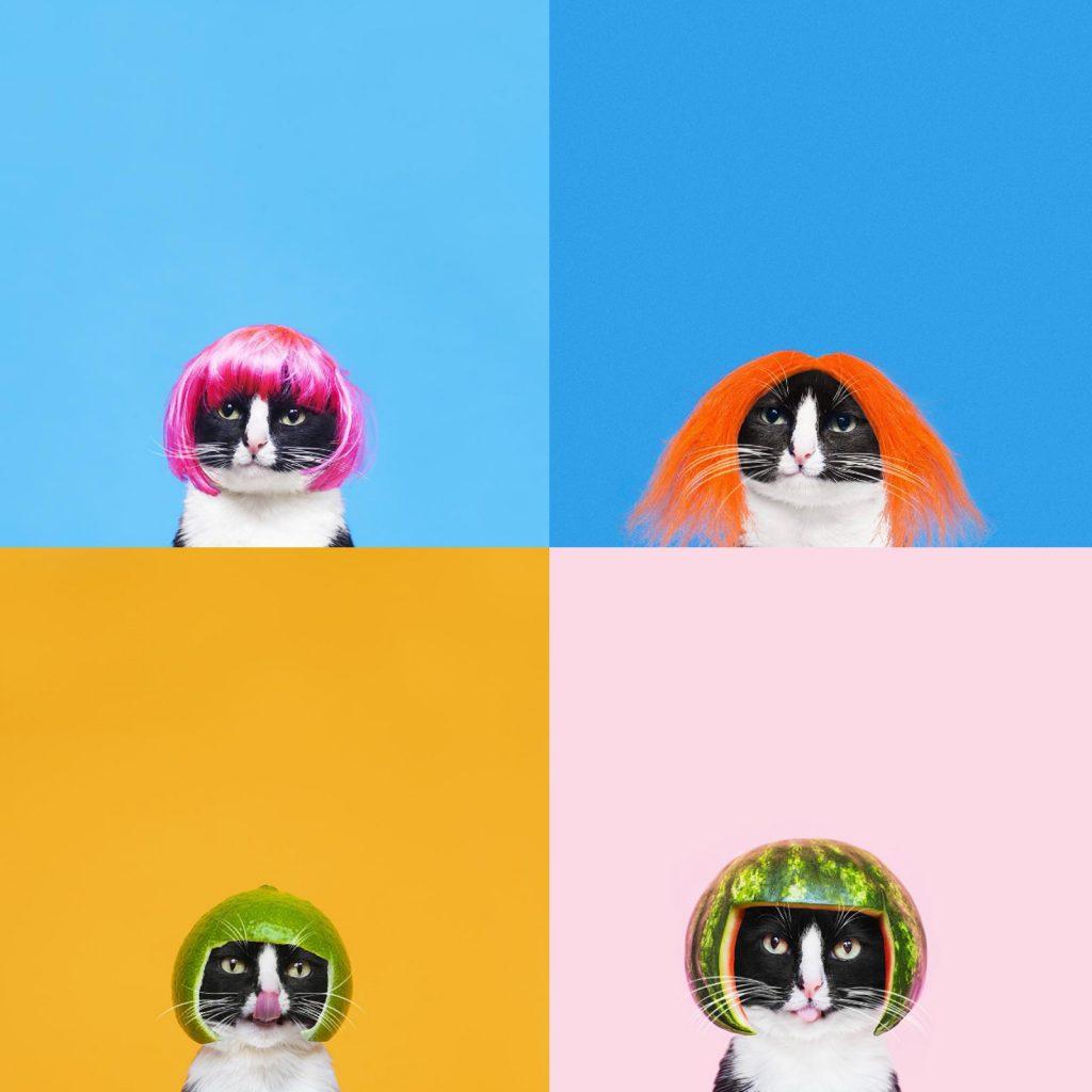 hugo-princess-cheeto-cat-04