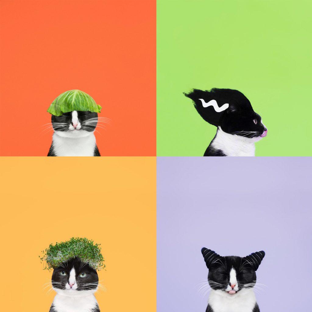 hugo-princess-cheeto-cat-06